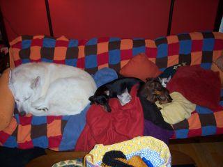 Five Snuggles