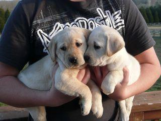 Puppies 01-18-2010 005