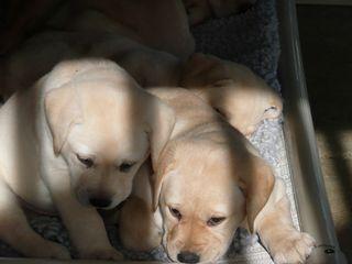 Puppies 01-23-2010 005