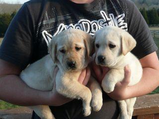 Puppies 01-18-2010 004