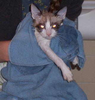 Evil Bathtime